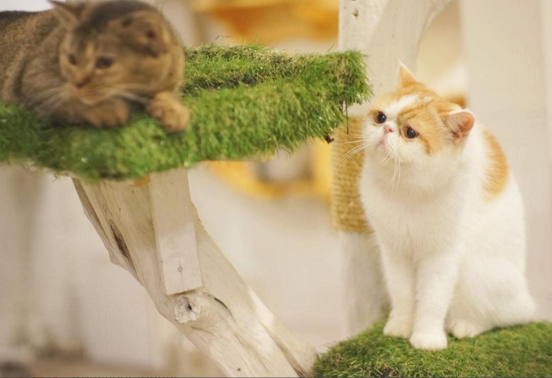 animal-cafes-in-bangkok-caturdaycatcafe