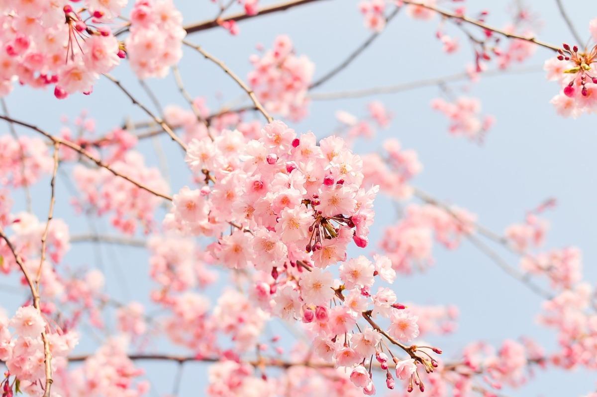 japan-seasons-spring