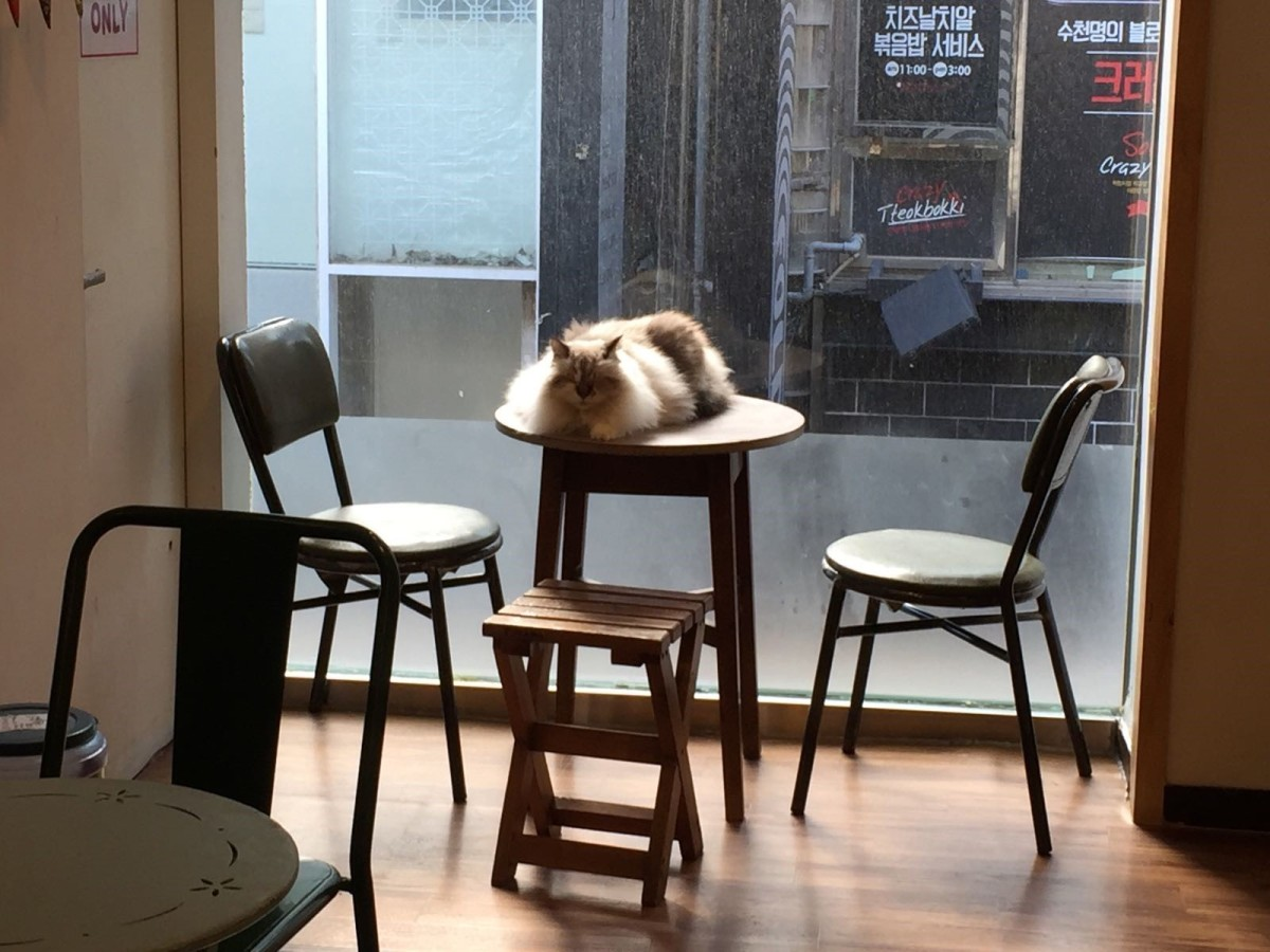 myeongdong-cat-cafe